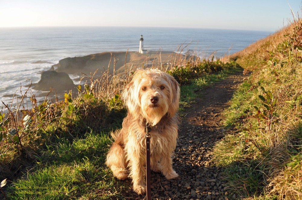 Hiking Yaquina Head (6/6)