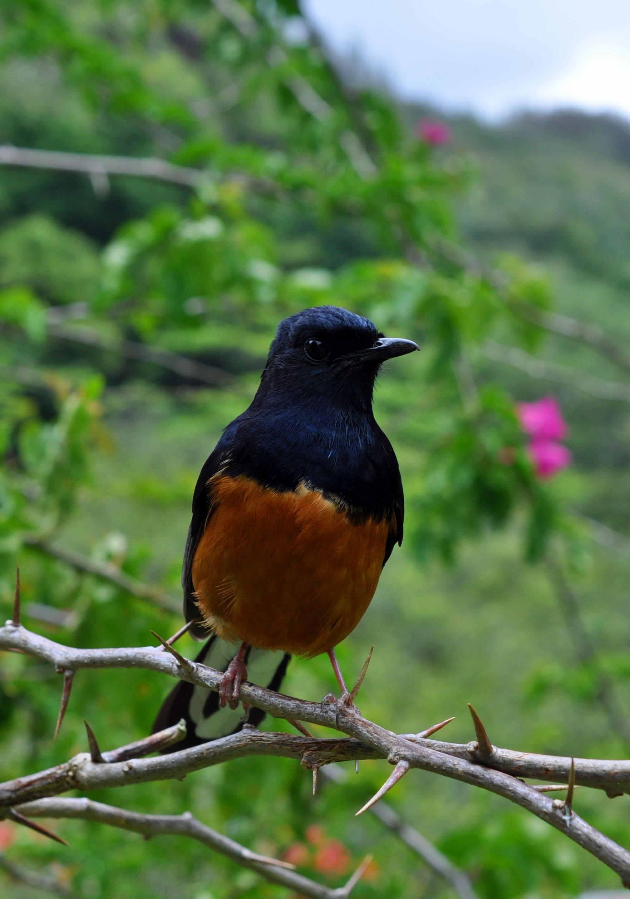 Hawaiian Adventures Ben S Birds Part I Lovelifeinc