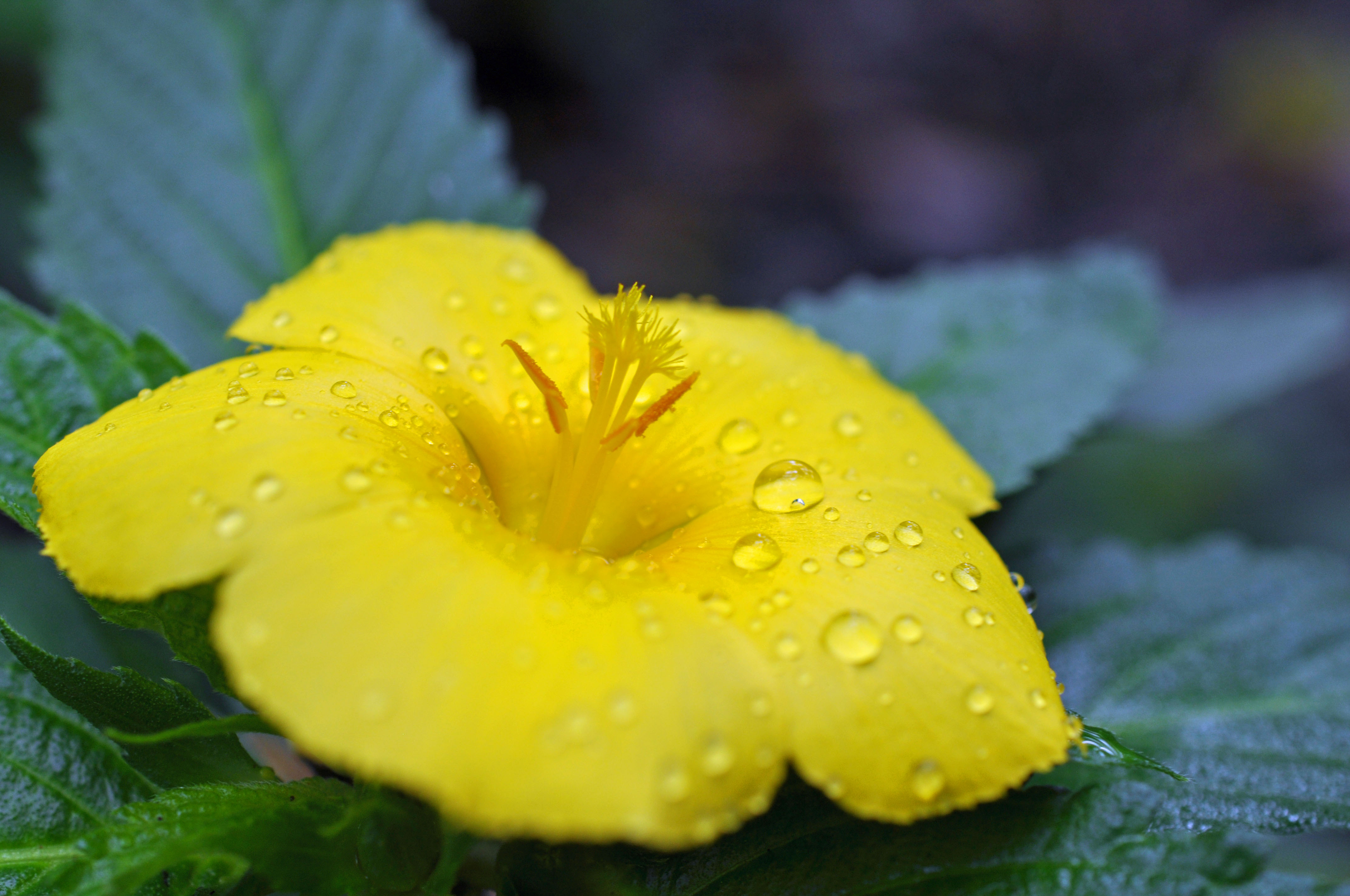 Hawaiian Adventures Flowers Part I Lovelifeinc