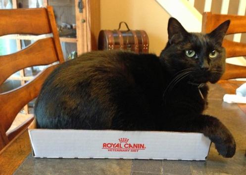Gus Box