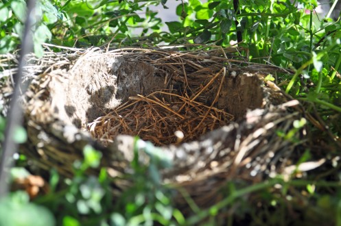 Nest final