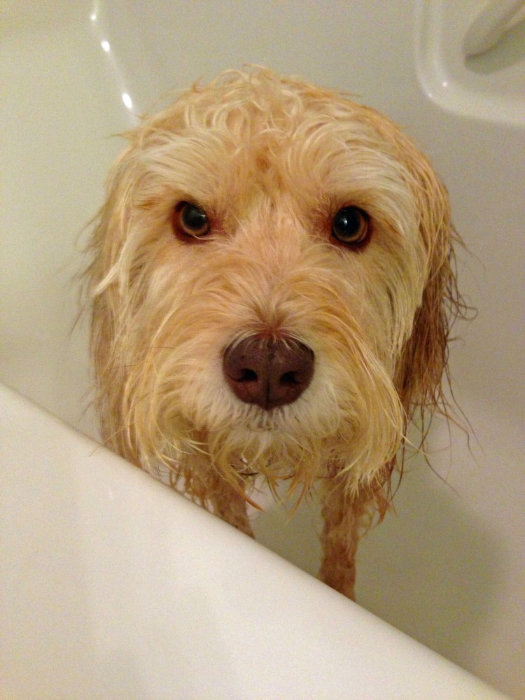 How to Bathe a Dog Without Going Insane ... (4/4)