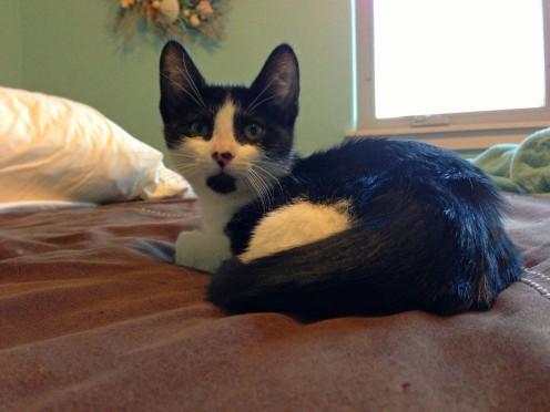New Kitty 5