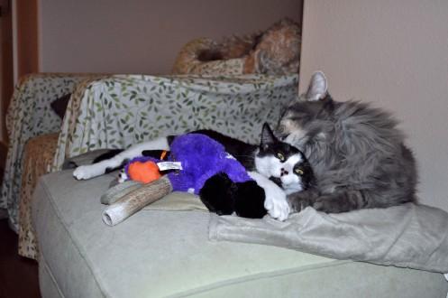 Cuddles 3