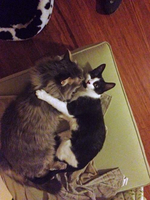 Cuddles 7