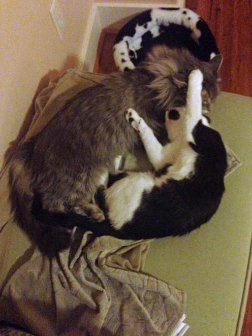 Cuddles 8