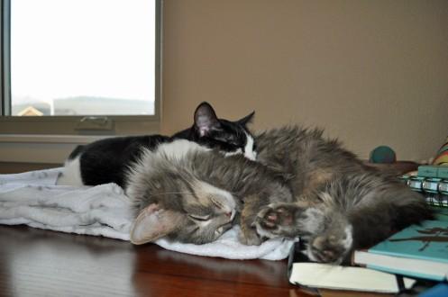 Cuddles 5