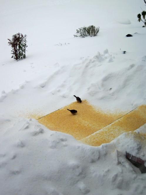 Snow II 05