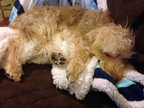Cooper Sleep 1