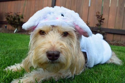 Cooper Bunny 01